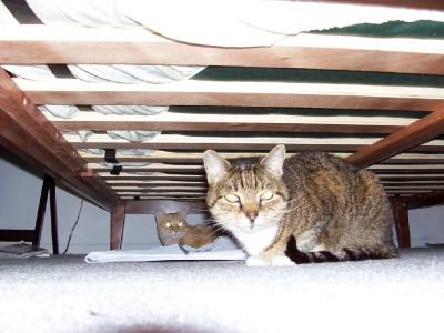 under_bed.jpg